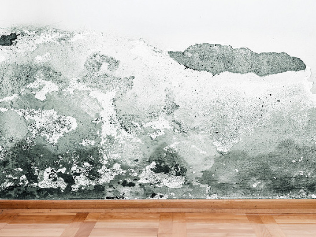 Banish Mold Growth From Your Property